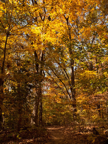 I took a look back while on the trail in Long Hunter state park and well, could you resist this shot?  This part of the park had more undergrowth than the rest and looks much more like a northern forest.  Check out that color!  This is almost SOOC, no color adjustment at all.
