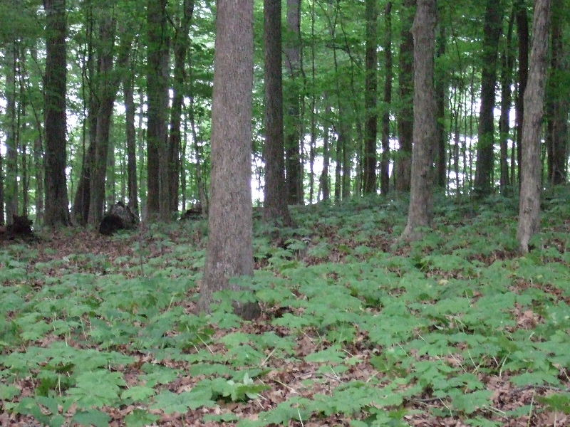 Look carefully in the center of this picture, and you'll see a raccoon!  This was from our campsite at Lake Barkley State Resort Park.