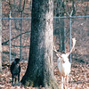 Land Between The Lakes National Recreation Area - Golden Pond, KY  11-29-98