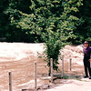 Cumberland River Was Overflowing Its Banks in Kentucky - May 1995
