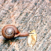 Snail on Walkway - Blue Heron Mine - Blue Heron, Kentucky - May 1995