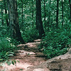 Rocky Trail - Mammoth Cave National Park, Kentucky - May 1995