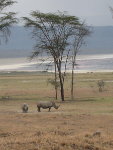 Rhino mother and baby, Lake Nakuru National Park.