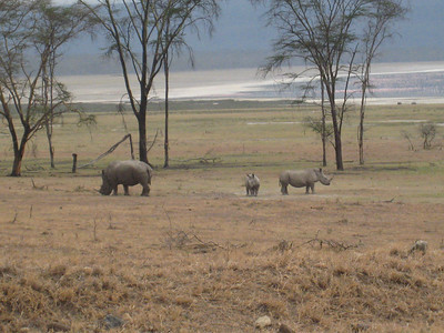 Rhino family at Lake Nakuru.