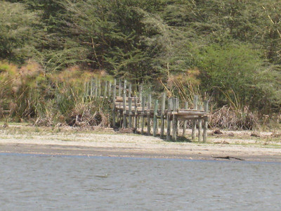On Lake Naivasha, a stranded jetty showing the drop in water level over the past few years.