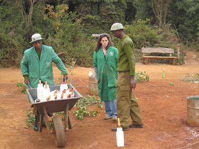 At the David Sheldrick Wildlife Sanctuary in Nairobi, home to orphaned elephants.  Angela and the keepers are laying out the feeding bottles prior to the arrival of the baby elephants.