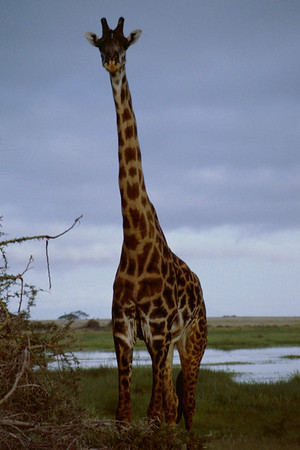 Kenya 1985 Safari, Nairobi and Mombasa