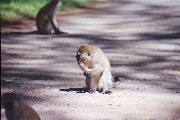 Kenya 1990
