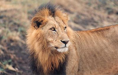 Kenya 1994