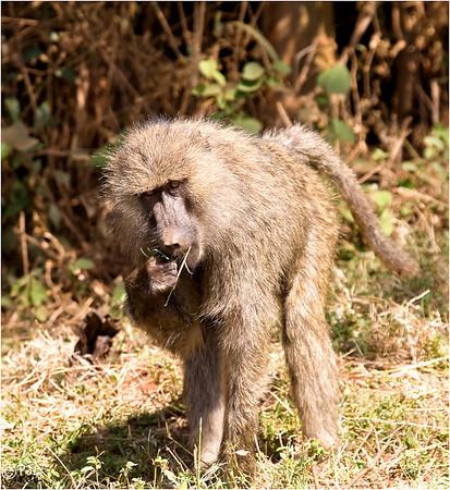 Kenya-2008