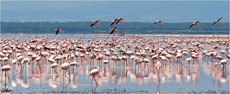 Lake Ngoru