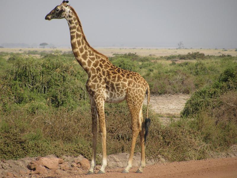 Kruger National Park <br /> South Africa