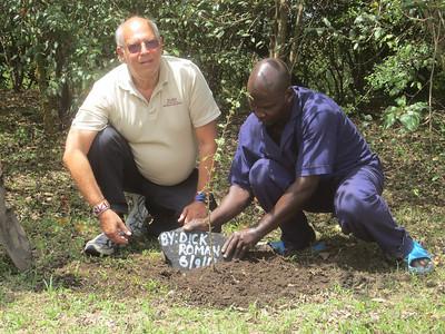Planting a Yellow Acacia in the Mara, Kenya