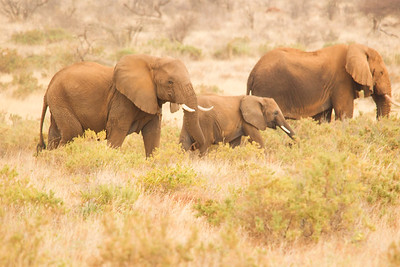 Mother elephant and year old