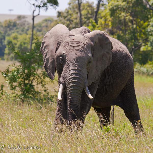 Elephant posing for us