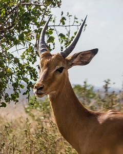 Nairobi National Park 2015