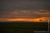 Maasai Mara Sunset and Masai Ostrich