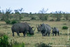Male and Female Black Rhinoceros and Calf