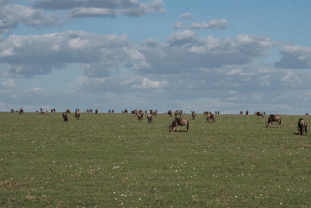 Safari at Masai-Mara