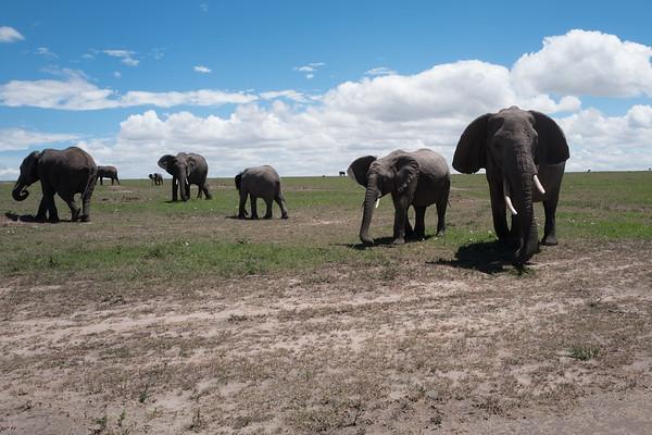 Elephants at the Masai-Mara