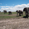 Elephants at the Masai-Mara
