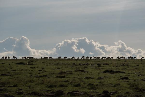 Almost sunset at Masai-Mara