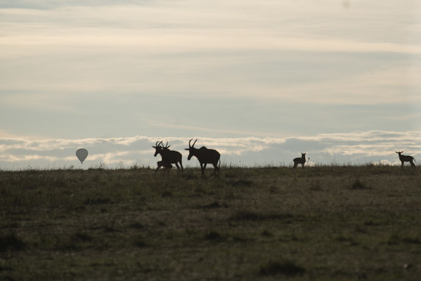 Sunrise at Masai-Mara