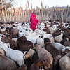 Masai and his goats - Masai-Mara, Kenya