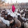 Masai and his goats - Masai-Mara, Kenya