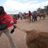 At the cattle market - Ngosoani, Kenya