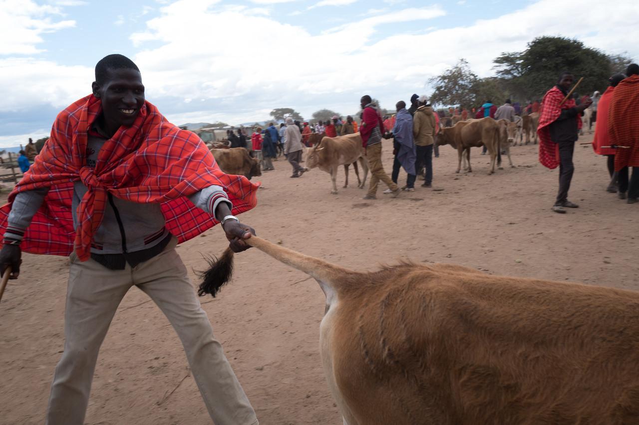 At the cattle market - Ngosoani, Kenya