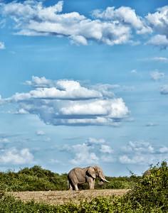 Kenya - Amboseli -2013