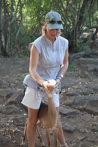 Feeding Orphaned Impala