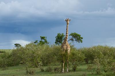Kenya III