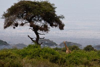 Kenya_D3C3634