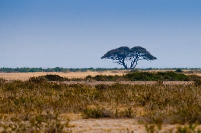 Kenya_D3C3624