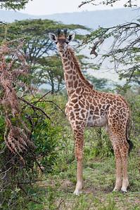 Kenya_D3C7147