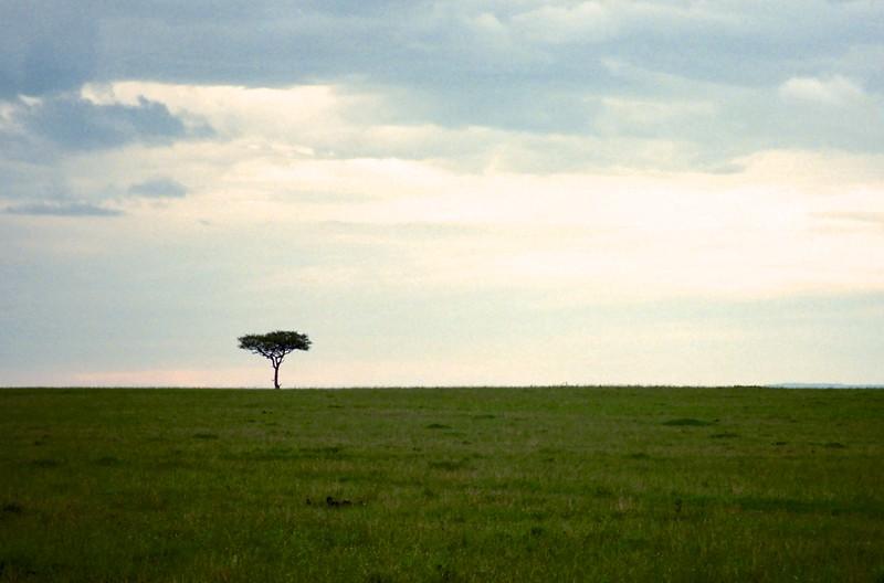 Acacia Tree - Masai Mara, Kenya, March 1999