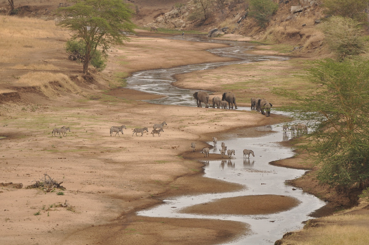 Tarangire River, Tarangire National Park, Tanzania →<br /> <br /> Tarangire National Park in Tanzania - the baobabs and spectacular scenery. Our favourite park, although the Masai Mara in Kenya would be a close second.