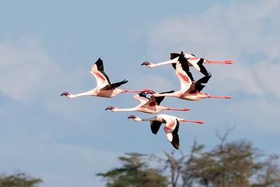 Kenya-Uganda Birds 2018