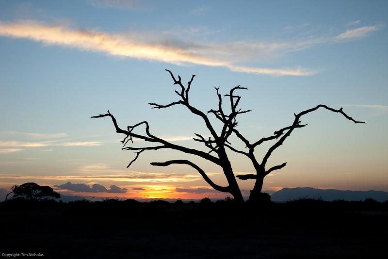 Amboseli Dead Tree Sunset