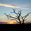 Amboseli Dead Tree Sunset