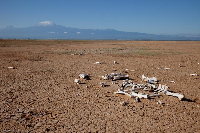 Amboseli Skeleton in Pan below Kiliminjaro