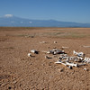 Amboseli Skeleton in Pan below Kiliminjaro