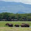 Amboseli Elephants wallowing