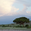 Amboseli Tree in front of Kiliminjaro