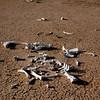 Amboseli Skeleton in Pan