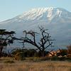 Amboseli Kiliminjaro Sunrise