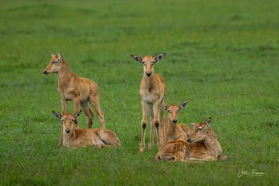Young Topi, Masai Mara