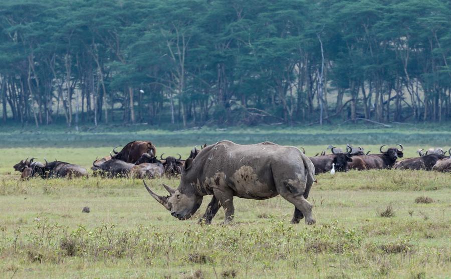 Жопа кения фото фото 670-347